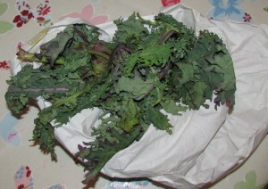 Kale from monday shop