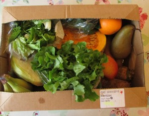 North Aston Organics Veggie Box
