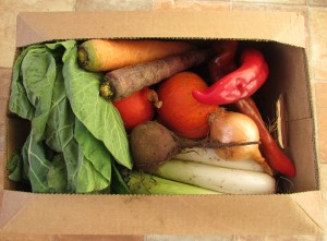 Westmill Organics Veggie box